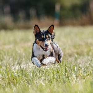 Tips For Toilet Training Your Pet Dog
