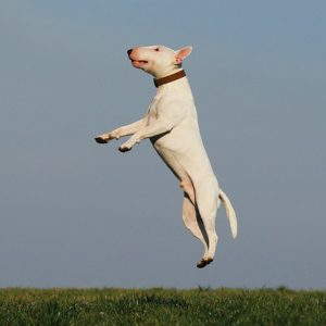 Tire Leap Basis Coaching in your Canine